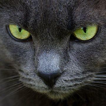 Green eyes van