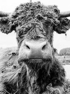 Schotse Hooglander zwart wit van Jessie Westphal