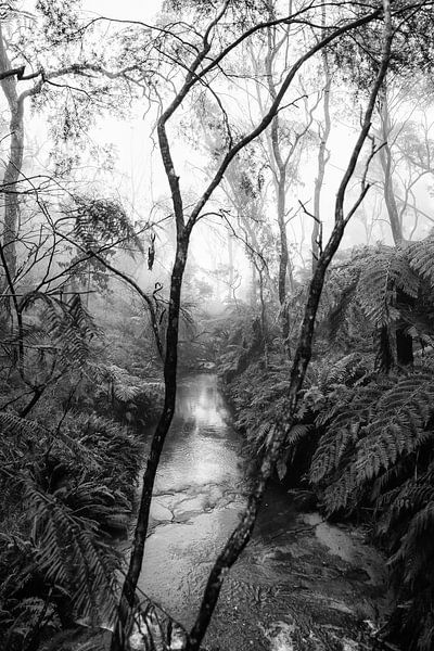 Forêt tropicale dans le brouillard XIV sur Ines van Megen-Thijssen