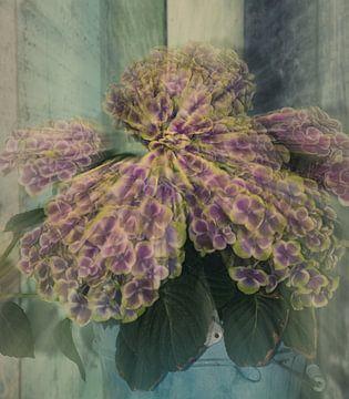 Paarse Hortensia bloem von Tonny Visser-Vink