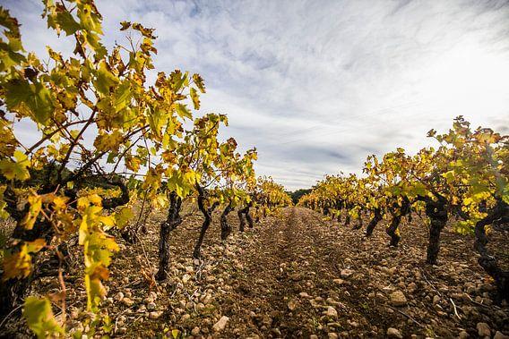 Wijngaarden in de Provence in Frankrijk