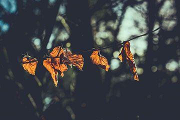 Herbstblätter in der Sonne von Maarten Mooijman