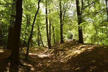 Pad door het bos van Winfred van den Bor