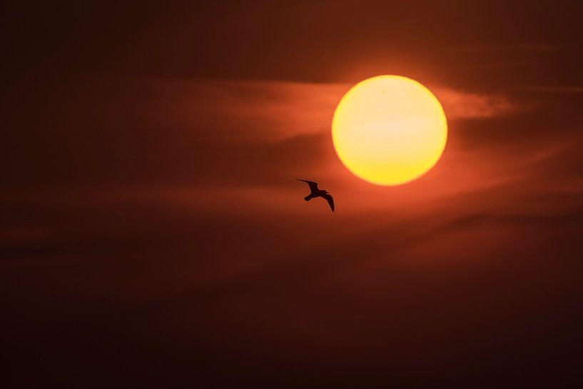 Vlieg naar de zon van Erik Veldkamp