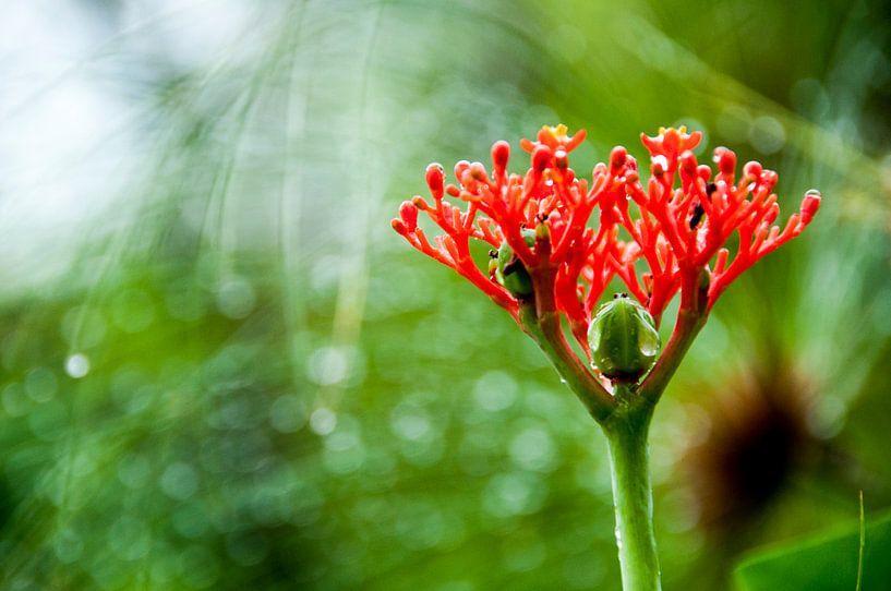 Tropische plant, Suriname van Ton de Koning