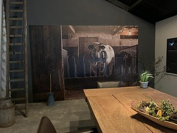 Klantfoto: Stier in oude stal van Danai Kox Kanters