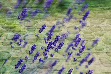 Echter Lavendel van Martina Fornal
