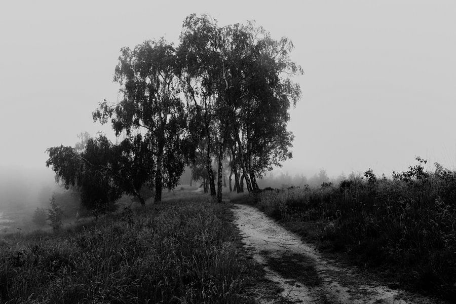 Misty Morning Birches van William Mevissen