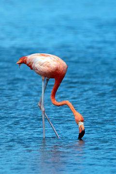 Flamingo van Henk Zielstra