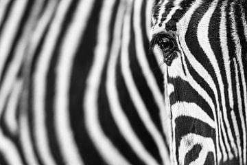 Zebra-Streifen von Richard Guijt Photography