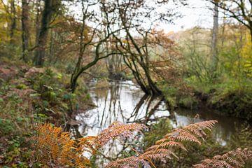 Landschaft mäandrierender Bach im Wald  im Herbst von Ger Beekes