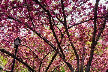 Central park in de bloei van Pim Korver