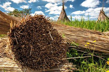 Schneiden Sie Schilf in der holländischen Landschaft ab von Fotografiecor .nl