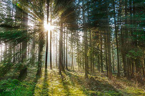 Ardenne Forest  van