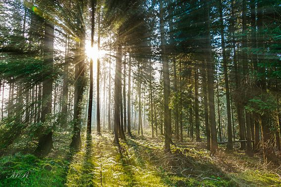 Ardenne Forest  van Madan Raj Rajagopal