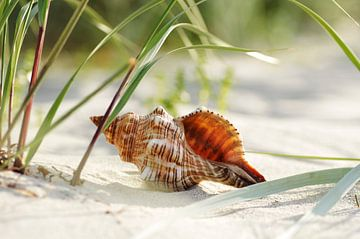 Muschel Träume am Strand sur Tanja Riedel