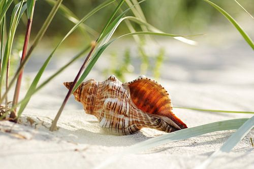 Muschel Träume am Strand van Tanja Riedel