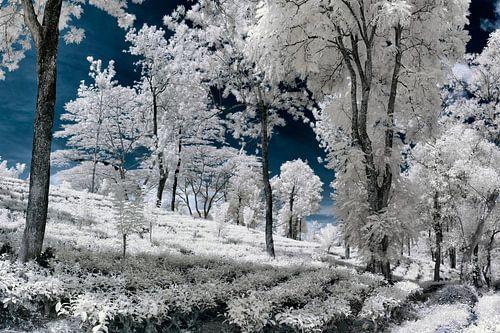 Delta Estate Infrared von Insolitus Fotografie