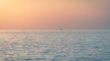 marin solitaire sur Alexander Dorn