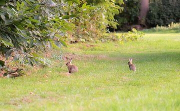 konijntjes in het gras van