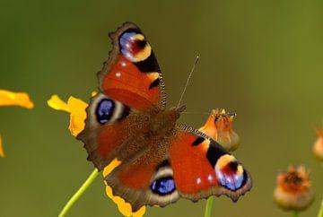 Butterfly von Harold Wilke