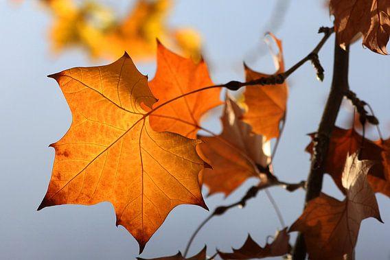 The Orange Leaf van Cornelis (Cees) Cornelissen