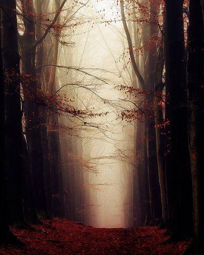 Autumns Face van Lars van de Goor
