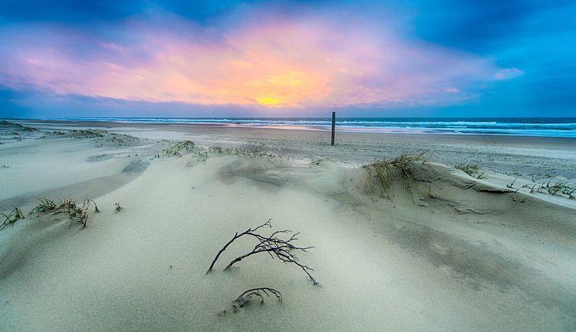 Branch at the Beach van Alex Hiemstra