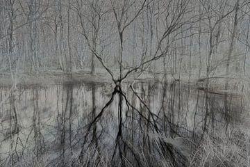 Sprookjesachtige bomendans in het bos van Lynxs Photography