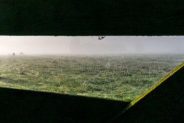 Spinnenweb en koeien in de mist