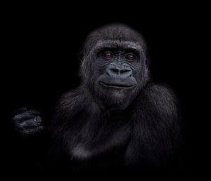 De jonge gorilla puber