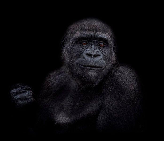 De jonge gorilla puber van Ron Meijer