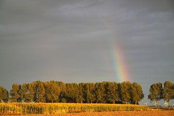 Regenboog over een laan met bomen van Rolf Pötsch