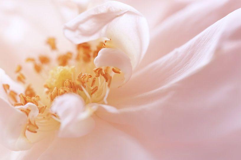 Rose Petals van LHJB Photography