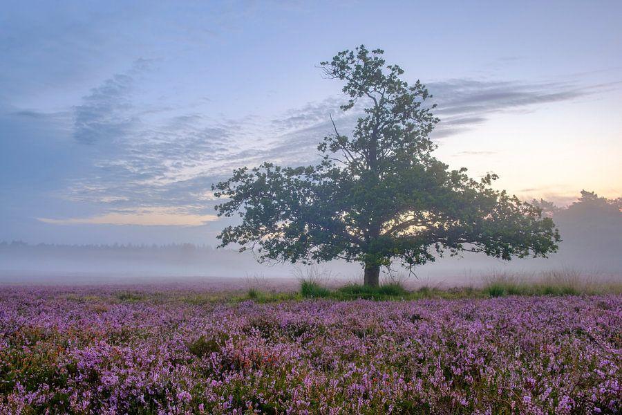Zonsopkomst boven de bloeiende heide op de Veluwe van Sjoerd van der Wal