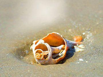 Onderwaterwereld   03 van Dirk H. Wendt