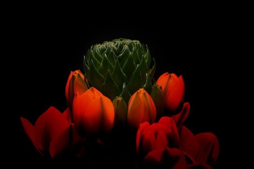 bloemknop van Nico Dam