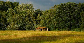 vervallen schuurtje aan bosrand van Luut Veenje