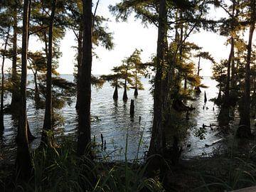 Swamp Trees van