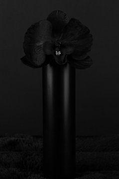 Schwarze Orchidee von Jeanine den Engelsman
