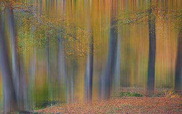Gekleurde herfst van Ina van Lambalgen