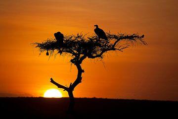 Zonsopgang in de Masai Mara van Angelika Stern
