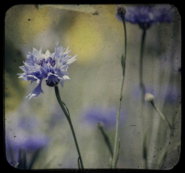 DIRTY WINDOW BLUES van Ans de Bie