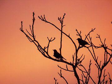 Silhouet van vogels in boom van Anita van Gendt