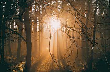 Laagstaande zon in het bos (Planken Wambuis) van Nicky Kapel