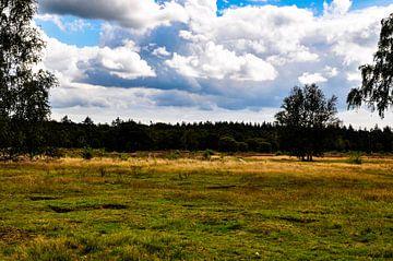 die Heide in Emelo von Heleen de Silva