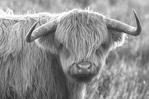 Junger schottischer Highlander von Willeke Bijker