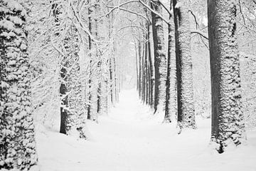 Boslaan, winter van Tess Smethurst-Oostvogel