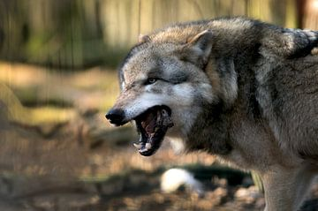 De wolf heeft honger van Tanja Riedel