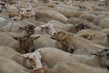 Kudde witte schapen van Maike Meuter